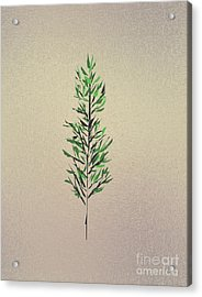 Green Leaves Acrylic Print by John Krakora