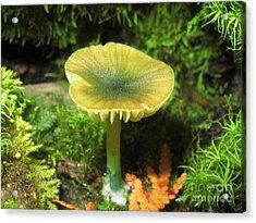 Green Leptonia Acrylic Print