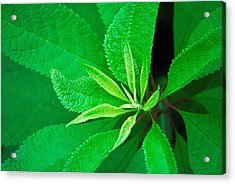 Green Acrylic Print by Ludwig Keck
