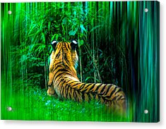 Green Meditation Acrylic Print by Glenn Feron