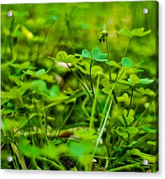 Green Morning  Acrylic Print by Andrew Raby