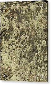 Acrylic Print featuring the photograph Green Moss by Les Palenik