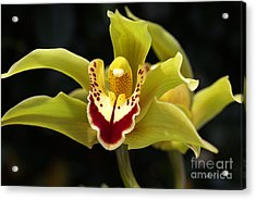 Green Orchid Flower Acrylic Print
