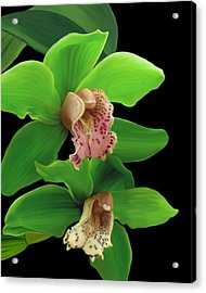 Green Orchids Acrylic Print