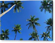 Green Palms Blue Sky Acrylic Print