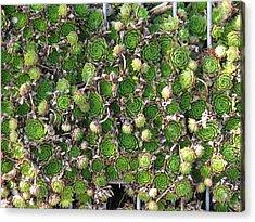 Green Petals Acrylic Print