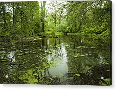 Green Blossoms On Pond Acrylic Print