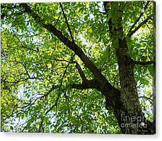 Acrylic Print featuring the photograph Green by Ramona Matei
