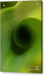 Green Acrylic Print by Rebeka Dove
