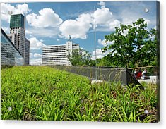 Green Roof Acrylic Print by Louise Murray