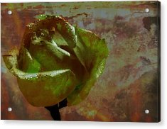 Green Rose Acrylic Print