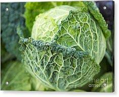 Green Ruffled Cabbage Acrylic Print