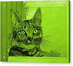 Green Sanguine ... Abstract Cat Art Painting Acrylic Print by Amy Giacomelli