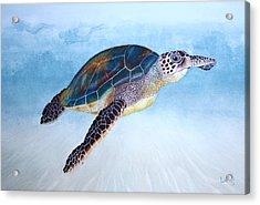 Green Sea Turtle II Acrylic Print by Jeff Lucas