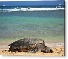 Green Sea Turtle - Kauai Acrylic Print by Shane Kelly