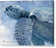 Green Sea Turtle Acrylic Print by Randall Scott