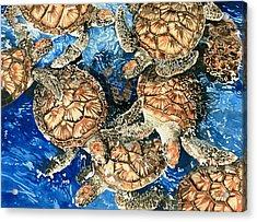 Green Sea Turtles Acrylic Print