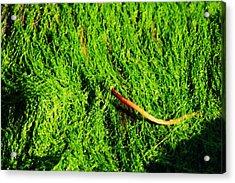Green - Seaside Abstract Acrylic Print by Aidan Moran