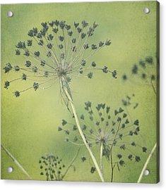 Green Seeds Acrylic Print by Rani Meenagh