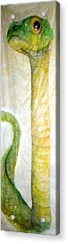 Green Snake Brings New Year Glow Acrylic Print