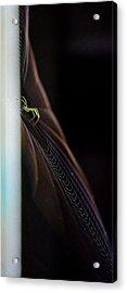 Green Spider Acrylic Print