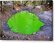 Green Spill Acrylic Print by David Lee Thompson