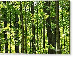 Green Spring Forest Acrylic Print by Elena Elisseeva