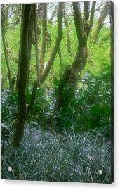 Green Study Acrylic Print by Kim Lessel