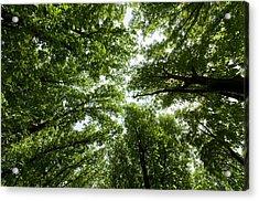 Green Summer Trees Acrylic Print by Ioan Panaite