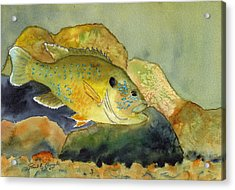 Green Sunfish Acrylic Print by Paul Temple
