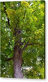 Green Tree 1 Acrylic Print by Lanjee Chee