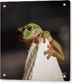 Green Tree Frog Keeping An Eye On You Acrylic Print