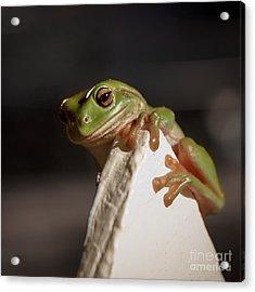 Green Tree Frog Keeping An Eye On You Acrylic Print by Peta Thames