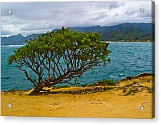 Green Tree Acrylic Print by Matt Radcliffe