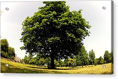 Green Tree Acrylic Print by Stephen Richards