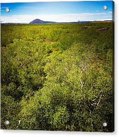 Green Trees In Iceland Acrylic Print