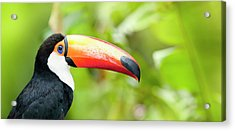 Green Tropical Rainforest With Toco Acrylic Print by Grafissimo