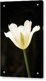 Green Tulip Acrylic Print
