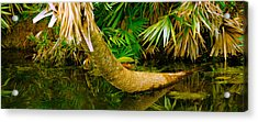 Green Turtle Chelonia Mydas In A Pond Acrylic Print