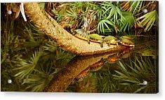 Green Turtles Chelonia Mydas On A Tree Acrylic Print