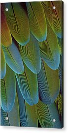 Green-winged Macaw Wing Feathers Acrylic Print by Darrell Gulin