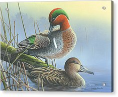 Green-winged Teal Ducks Acrylic Print