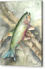 Greenback Cutthroat Trout Acrylic Print by Kimberly Lavelle