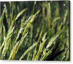Greener Grass Acrylic Print by Kaleidoscopik Photography