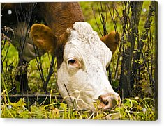 Greener On The Other Side Of The Fence Acrylic Print by David Simons