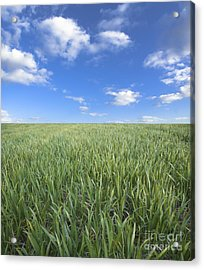 Greens And Sky Acrylic Print by Boon Mee