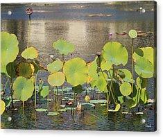 Greens On A Pond 3 Acrylic Print by Mark Steven Burhart