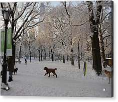 Greeting Friends In Central Park Acrylic Print by Winifred Butler