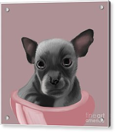 Grey Chihuahua In The Pink Acrylic Print