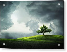 Grey Clouds Over Field With Tree Acrylic Print by Bess Hamiti